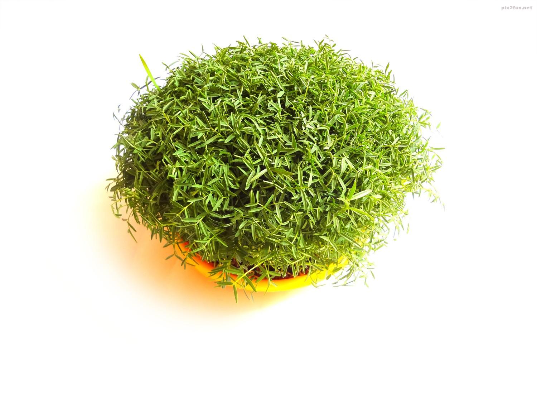 سبزه متفاوت عید