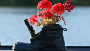 flowers-shoes-vase